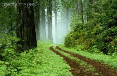 El Camino de la Alegría